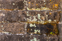 Several types of lichen growing on the ancient brick of the Great Wall.